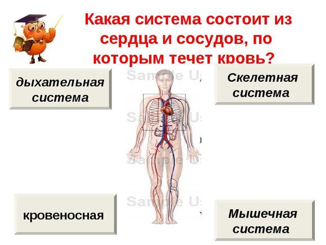 Какая система состоит из сердца и сосудов, по которым течет кровь? кровеносн...