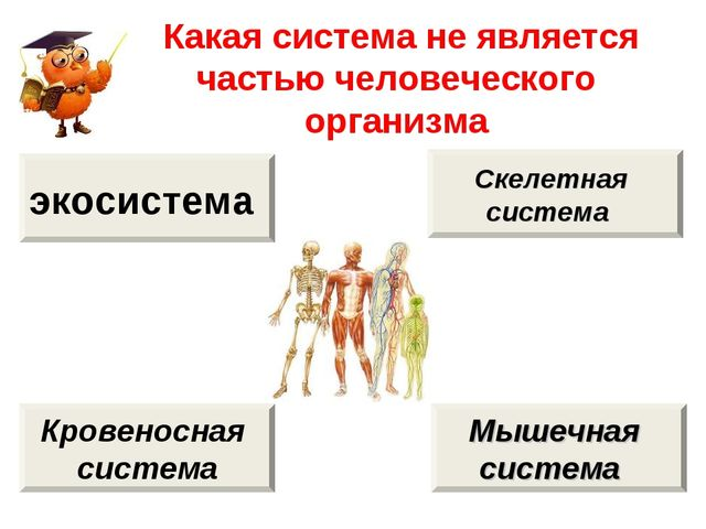 Какая система не является частью человеческого организма экосистема Кровенос...