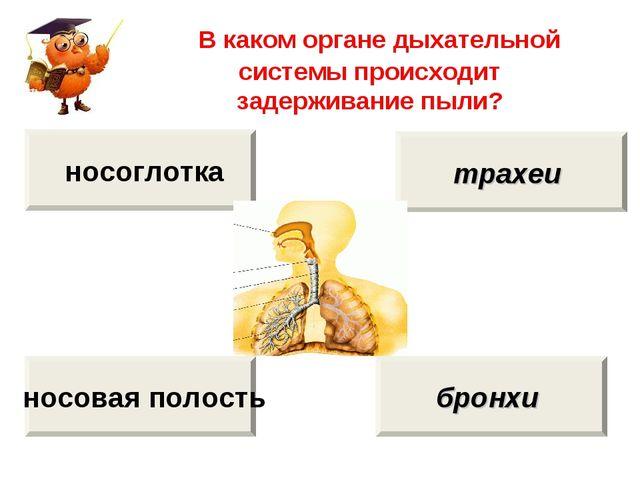 В каком органе дыхательной системы происходит задерживание пыли? носовая пол...