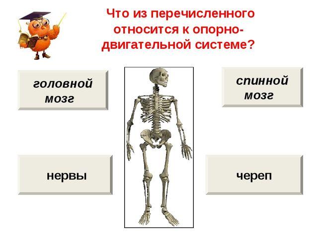 Что из перечисленного относится к опорно-двигательной системе? череп нервы с...