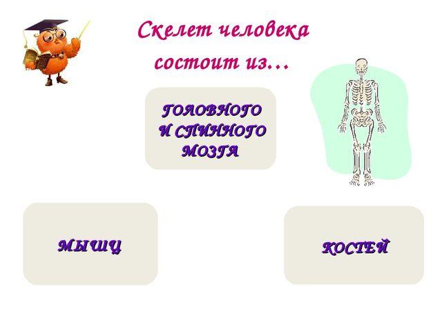 Скелет человека состоит из… КОСТЕЙ МЫШЦ ГОЛОВНОГО И СПИННОГО МОЗГА