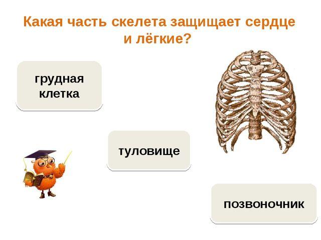 Какая часть скелета защищает сердце и лёгкие? грудная клетка позвоночник туло...