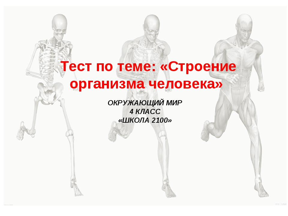Тест по теме: «Строение организма человека» ОКРУЖАЮЩИЙ МИР 4 КЛАСС «ШКОЛА 21...