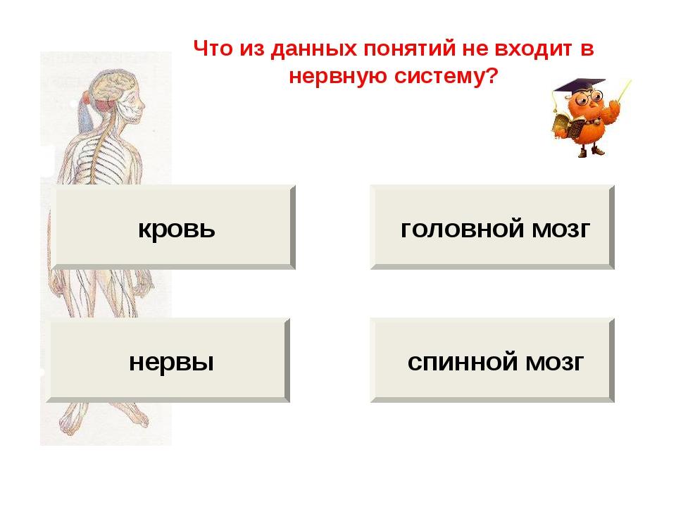 кровь нервы головной мозг спинной мозг Что из данных понятий не входит в нер...
