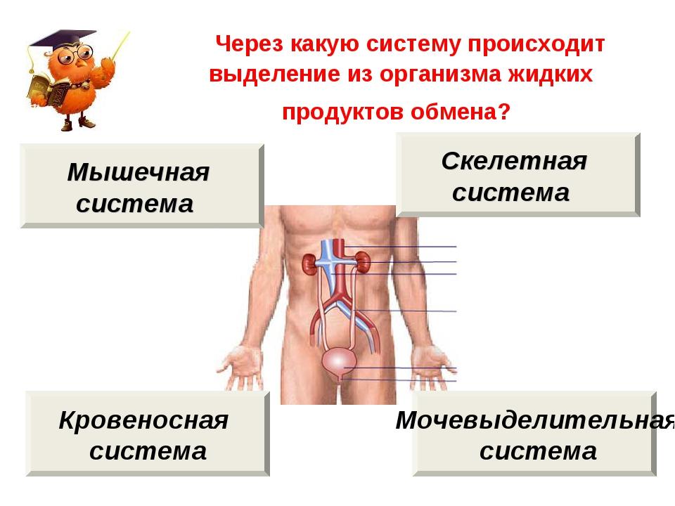 Через какую систему происходит выделение из организма жидких продуктов обмен...