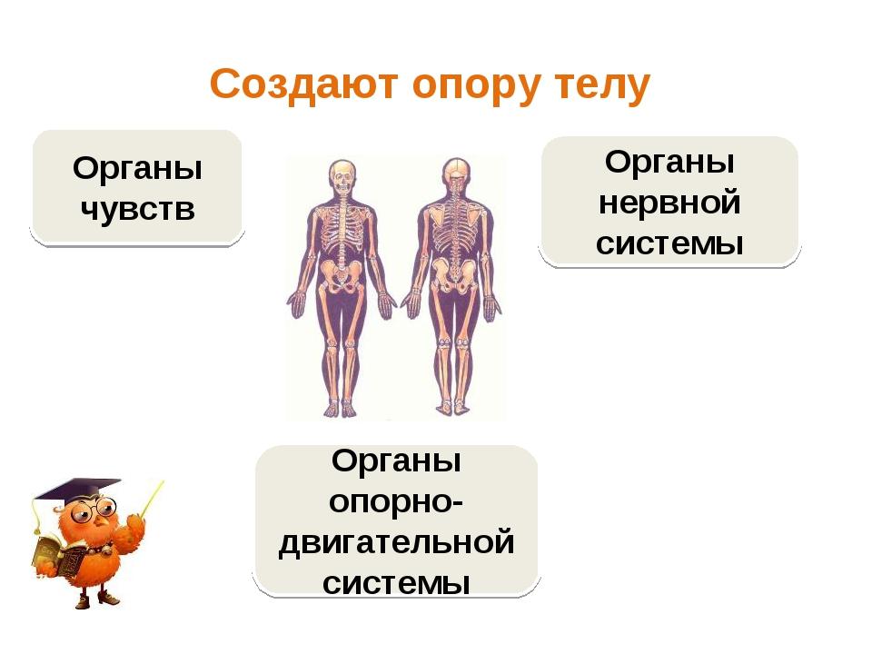 Создают опору телу Органы опорно-двигательной системы Органы чувств Органы не...