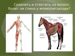 Сравнить и ответить на вопрос: болит ли спина у млекопитающих?