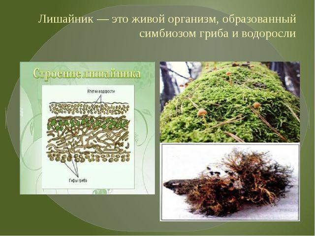 Лишайник — это живой организм, образованный симбиозом гриба и водоросли