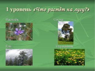 1 уровень «Что растёт на лугу?» Василёк Сосна Ель Одуванчик