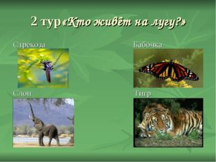 2 тур«Кто живёт на лугу?» Стрекоза Бабочка Слон Тигр