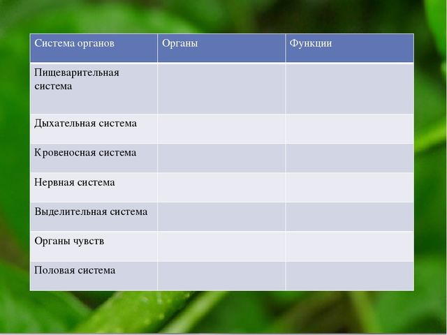 Система органов Органы Функции Пищеварительнаясистема Дыхательная система Кро...