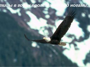 … птицы в горах пролетают под ногами…