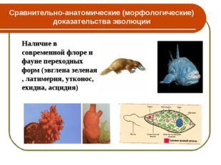 Сравнительно-анатомические (морфологические) доказательства эволюции Наличие