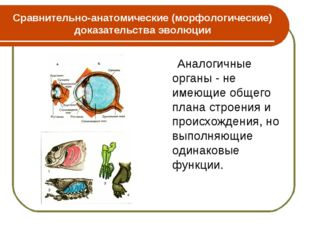 Сравнительно-анатомические (морфологические) доказательства эволюции Аналогич