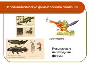 Палеонтологические доказательства эволюции Археоптерикс Ископаемые переходные