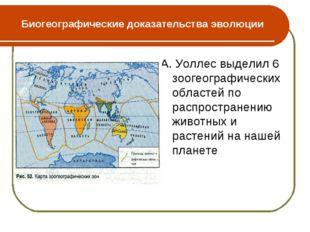 Биогеографические доказательства эволюции А. Уоллес выделил 6 зоогеографическ