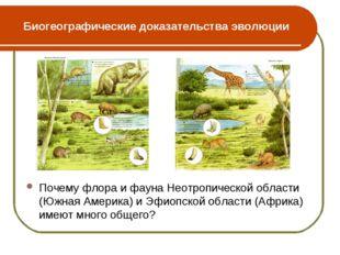 Биогеографические доказательства эволюции Почему флора и фауна Неотропической