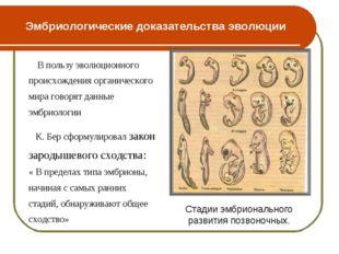 Эмбриологические доказательства эволюции В пользу эволюционного происхождения
