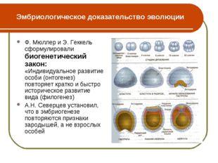 Эмбриологическое доказательство эволюции Ф. Мюллер и Э. Геккель сформулировал