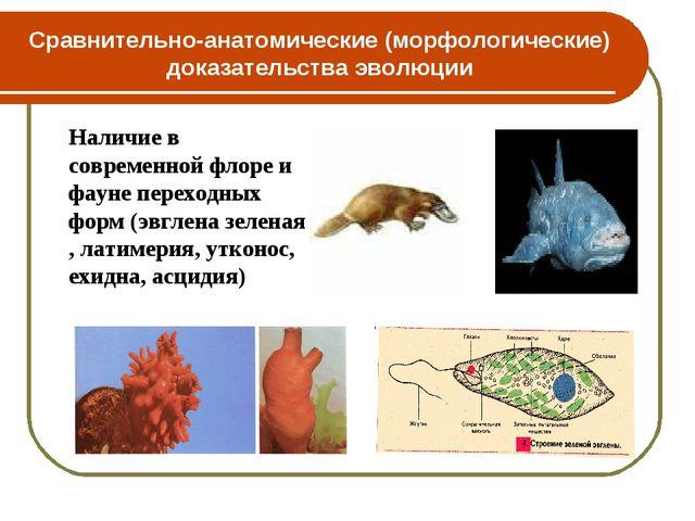 Сравнительно-анатомические (морфологические) доказательства эволюции Наличие...