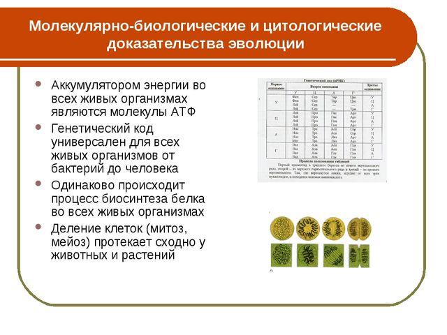 Молекулярно-биологические и цитологические доказательства эволюции Аккумулято...