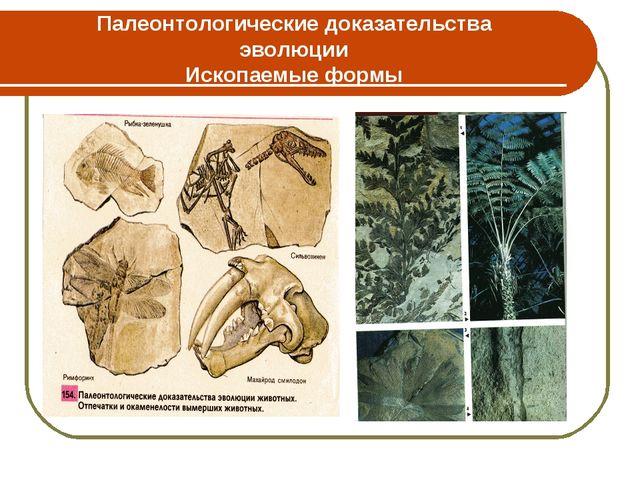 Палеонтологические доказательства эволюции Ископаемые формы