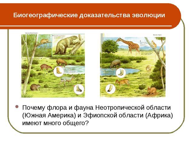 Биогеографические доказательства эволюции Почему флора и фауна Неотропической...