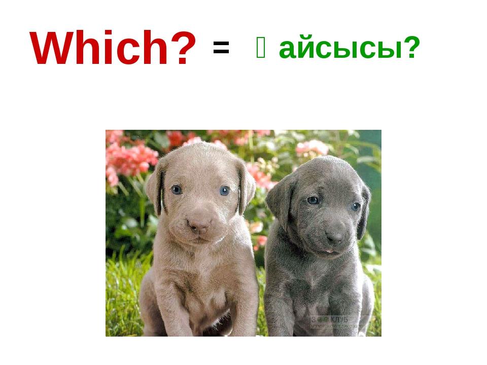 Which? = Қайсысы?