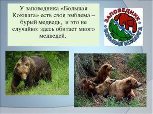 У заповедника «Большая Кокшага» есть своя эмблема – бурый медведь, и это не