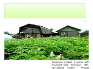 Фоторепортаж. Огородные традиции. Выполнила ученица 6 класса МОУ Ильинской С