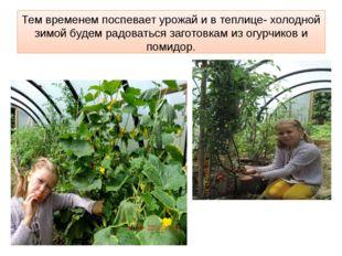 Тем временем поспевает урожай и в теплице- холодной зимой будем радоваться за