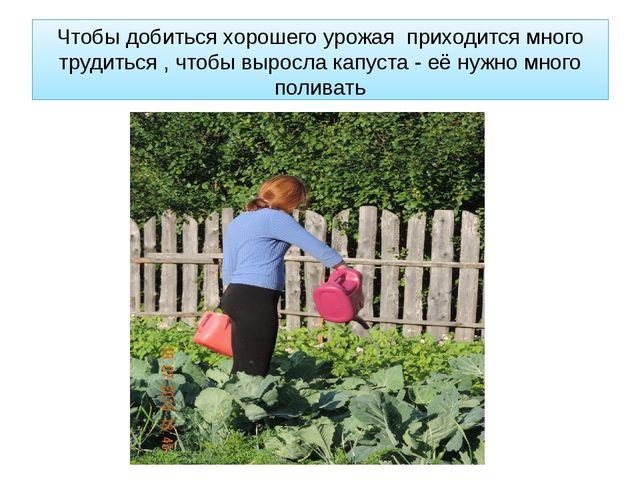 Чтобы добиться хорошего урожая приходится много трудиться , чтобы выросла кап...
