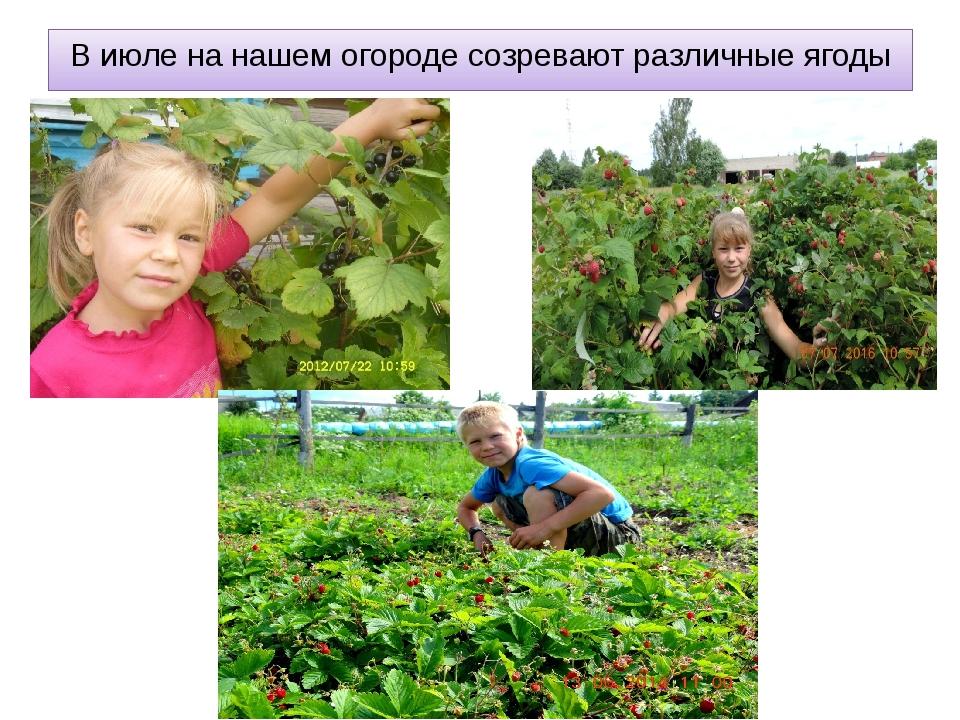 В июле на нашем огороде созревают различные ягоды