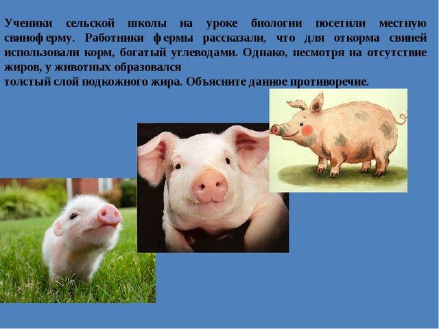 Ученики сельской школы на уроке биологии посетили местную свиноферму. Работни...