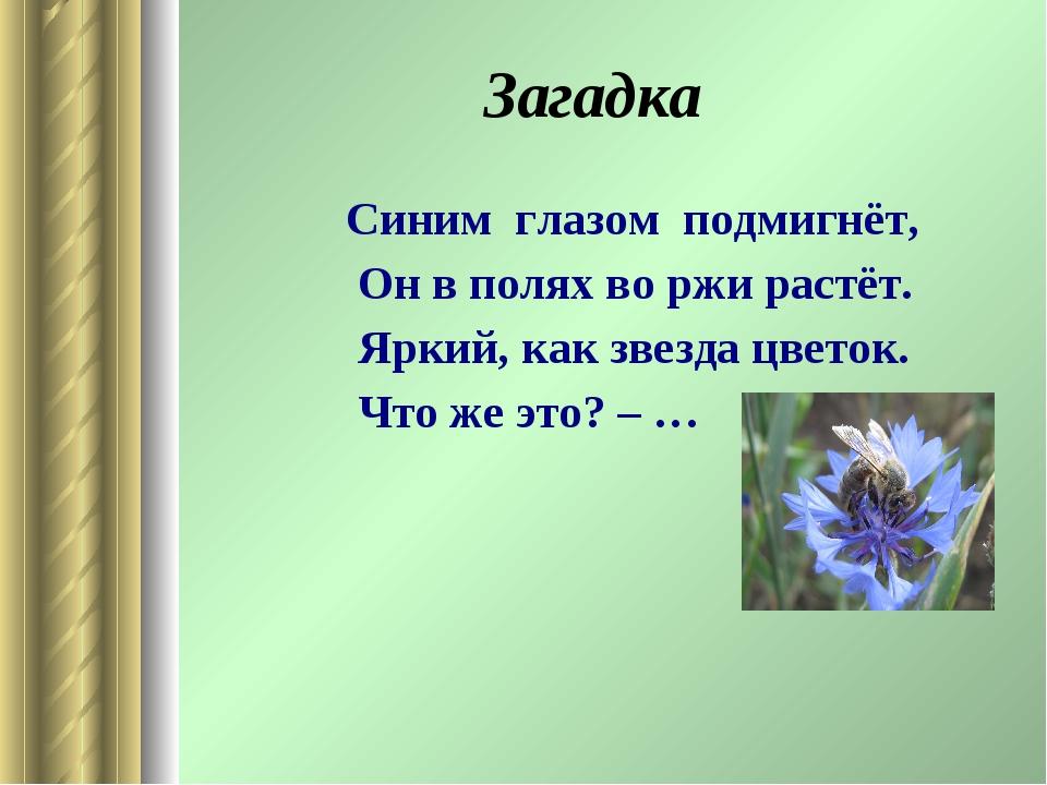 Загадка Синим глазом подмигнёт, Он в полях во ржи растёт. Яркий, как звезда...
