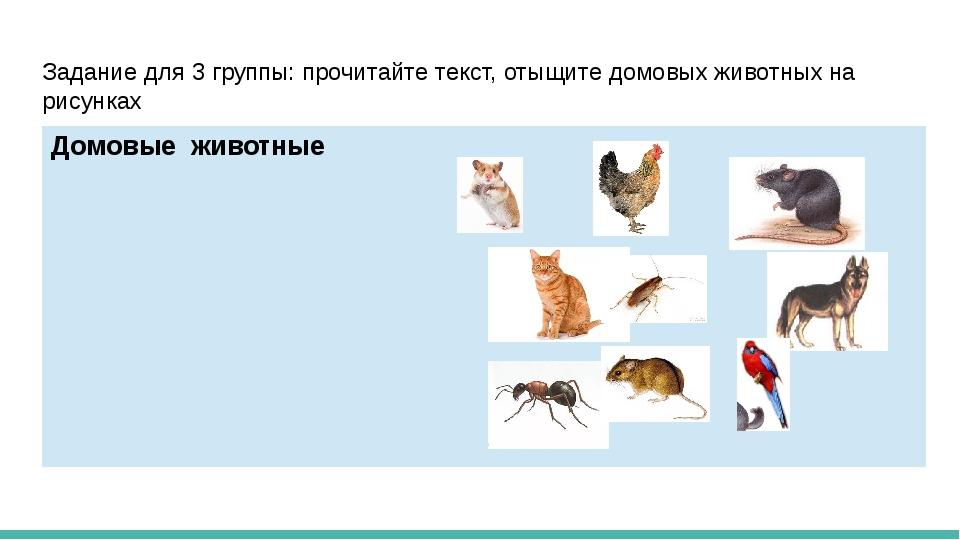 Задание для 3 группы: прочитайте текст, отыщите домовых животных на рисунках...