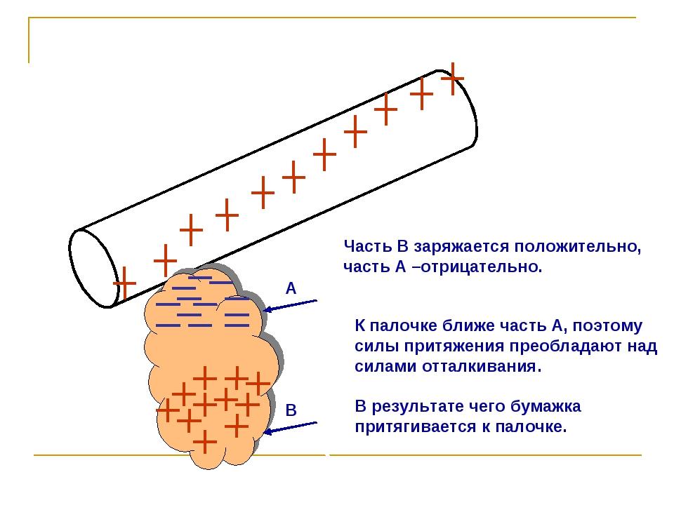 Часть В заряжается положительно, часть А –отрицательно. К палочке ближе часть...