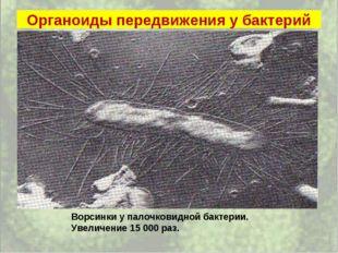 Органоиды передвижения у бактерий Ворсинки у палочковидной бактерии. Увеличен