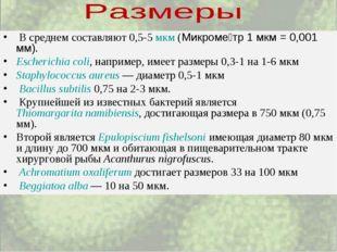 В среднем составляют 0,5-5 мкм (Микроме́тр 1 мкм = 0,001 мм). Escherichia c