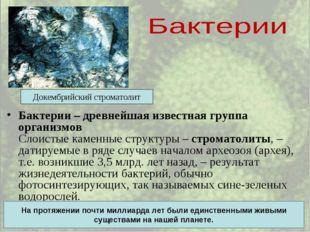 Бактерии – древнейшая известная группа организмов Слоистые каменные структуры