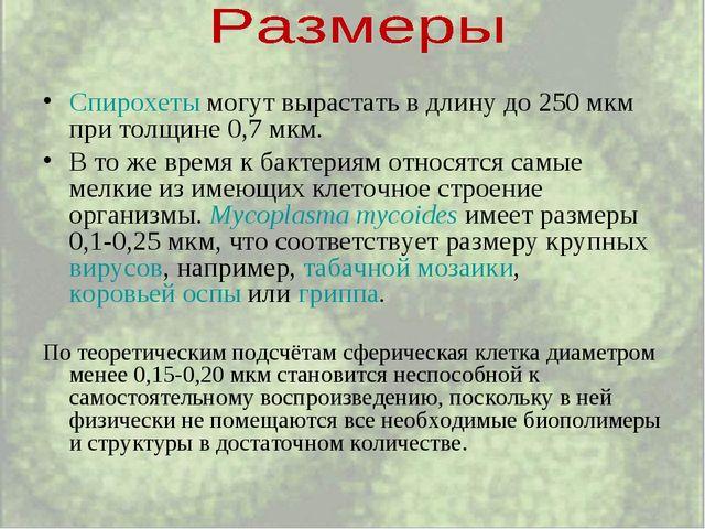 Спирохеты могут вырастать в длину до 250 мкм при толщине 0,7 мкм. В то же вре...