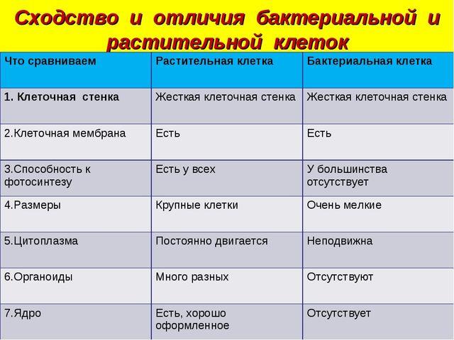 Сходство и отличия бактериальной и растительной клеток Что сравниваемРастите...