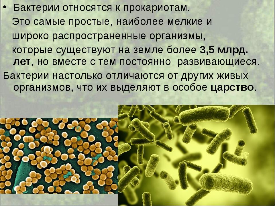 Бактерии относятся к прокариотам. Это самые простые, наиболее мелкие и широко...