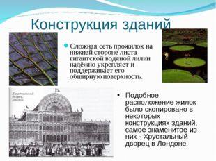 Конструкция зданий Сложная сеть прожилок на нижней стороне листа гигантской в