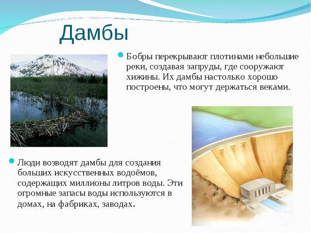 Дамбы Бобры перекрывают плотинами небольшие реки, создавая запруды, где соору...