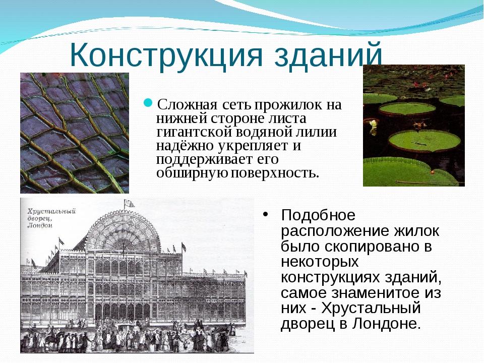 Конструкция зданий Сложная сеть прожилок на нижней стороне листа гигантской в...