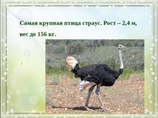 Самая крупная птица страус. Рост – 2,4 м, вес до 156 кг.