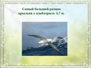 Самый большой размах крыльев у альбатроса: 3,7 м.