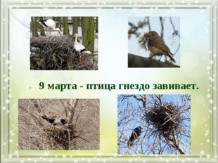 9 марта - птица гнездо завивает.