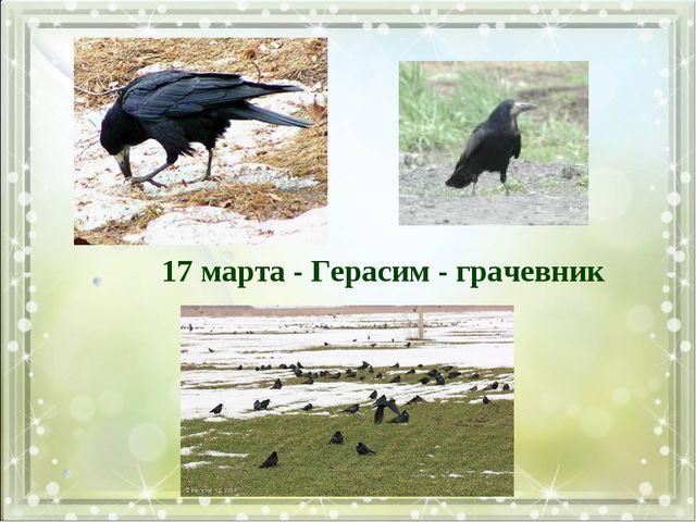 17 марта - Герасим - грачевник